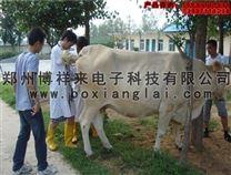 牛用B超如何鉴别奶牛胎儿公母-博祥来牛用B超