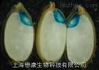 MM1001GUS染色试剂盒(组织化学定位法)植物细胞培养