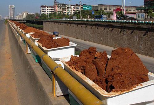 高架桥垂直绿化存在的问题及解决方案