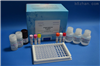 仓鼠核因子κB受体活化因子配基(RANKL)ELISA试剂盒