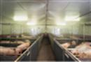 养猪场高压喷雾除臭设备
